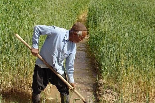 کشاورزان زنجانی برای برداشت محصول وضعیت جوی را پیگیری نمایند