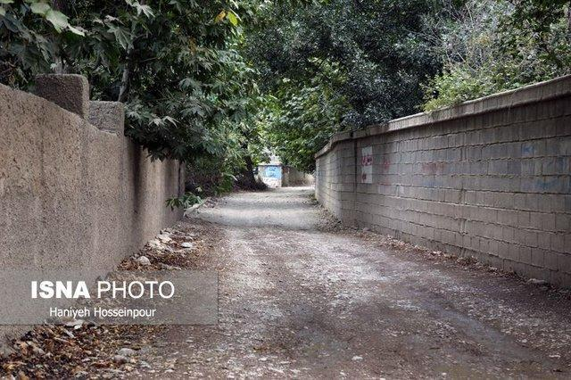انتقاد یک عضو شورای شهر از تداوم تخریب باغ های شیراز