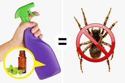از بین بردن عنکبوت ها و حشرات در خانه با مواد طبیعی