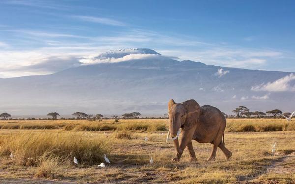 راهنمای سفر به کنیا، کشور ناشناخته های مجذوب کننده